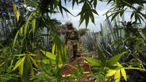 mexico_marijuana_soldier_2015_02_08